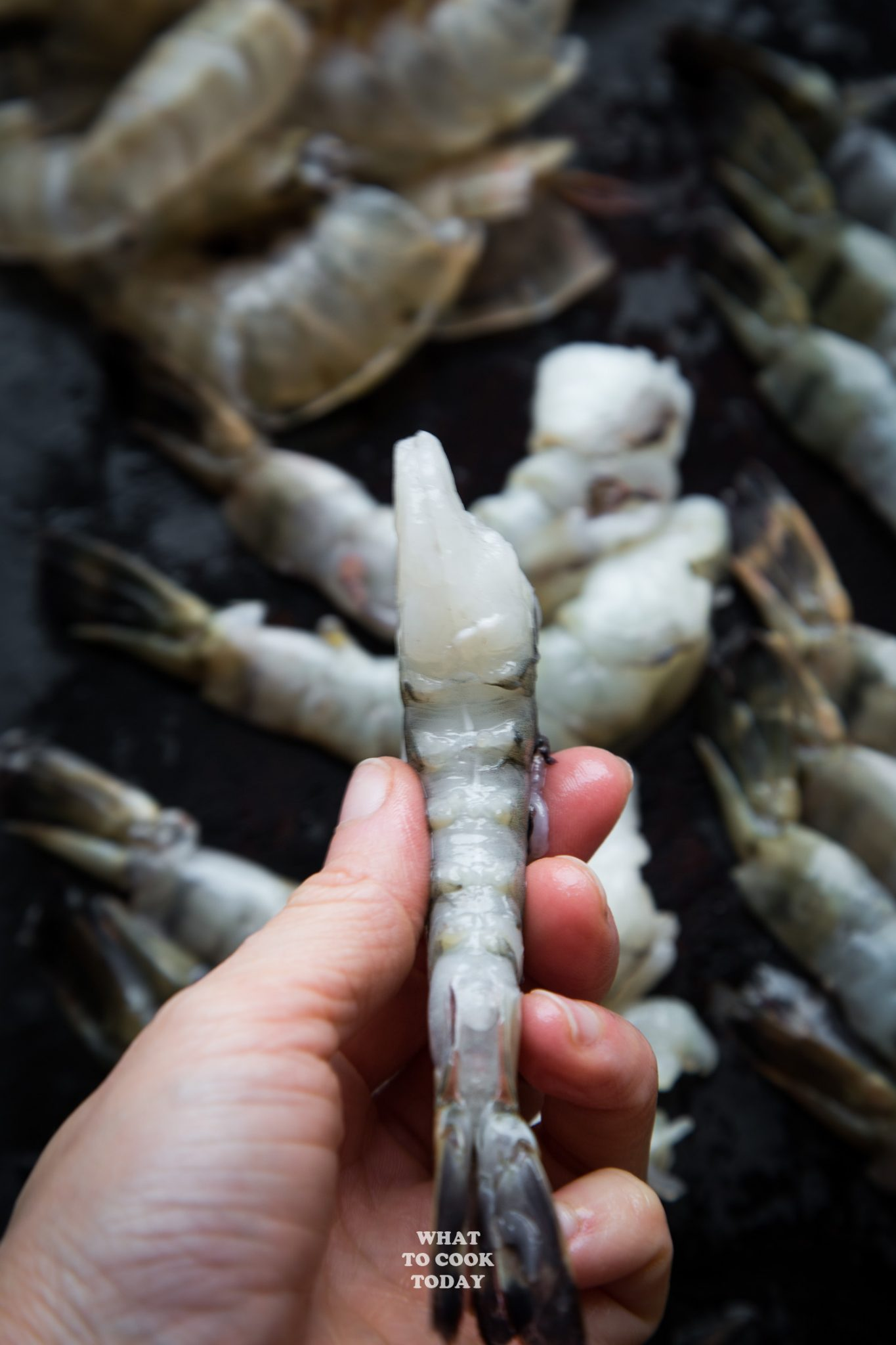Tiger Shrimp