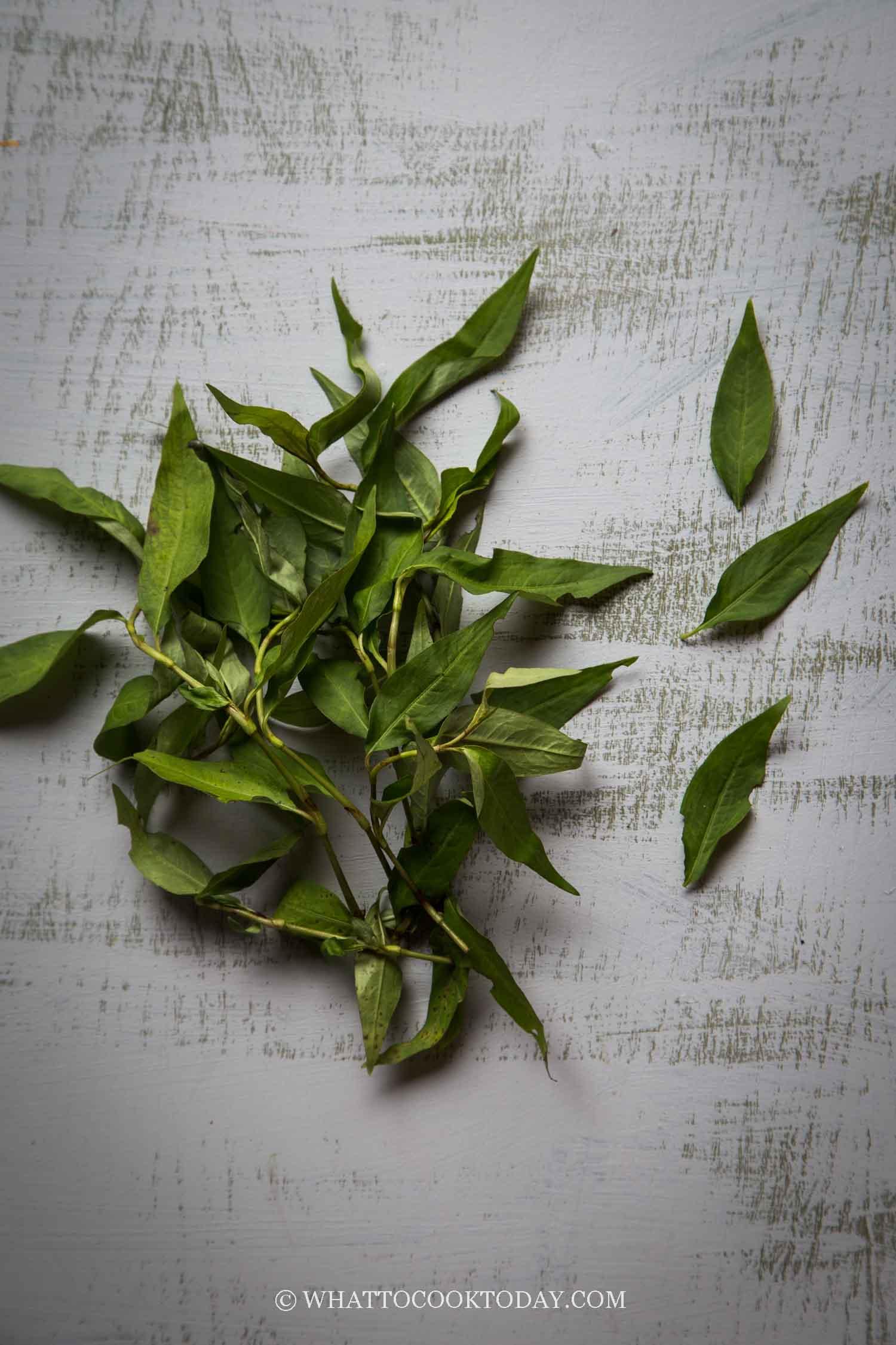 Laksa Leave / Vietnamese Coriander / Rau Ram / Daun Kesum