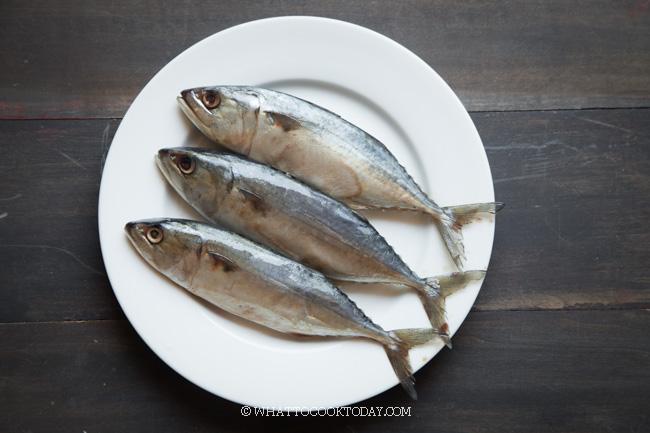 Ikan Kembung (Chub Mackerel)