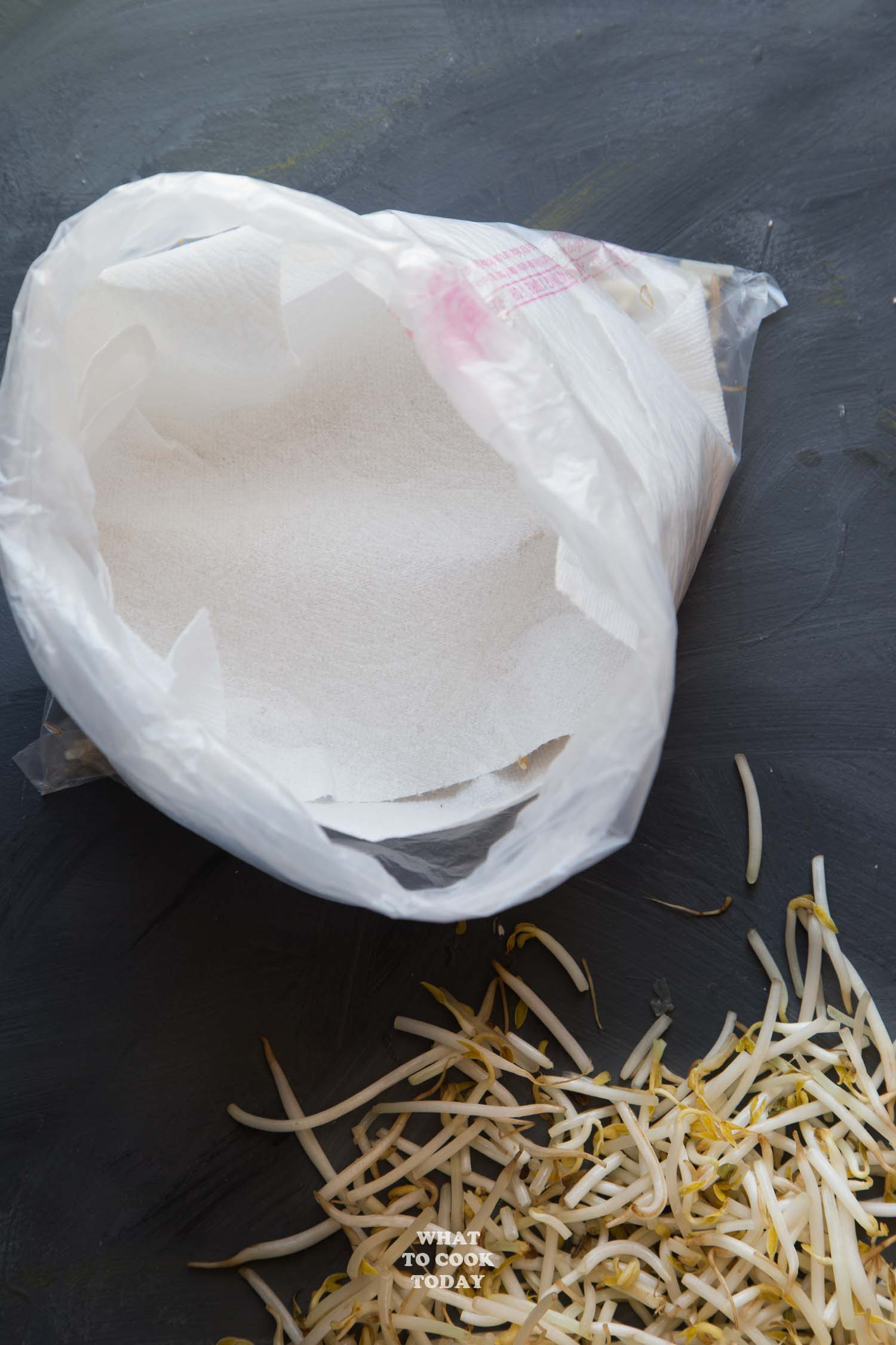 How To Keep Bean Sprouts Fresh Longer ?